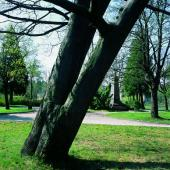 Park ve Vrkoslavicích