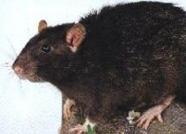 Potkan