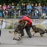 Ukázka výcviku psů, autor: Petr Vitvar