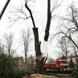 Zdvihání odřezané větve jeřábem, autor: Petr Vitvar