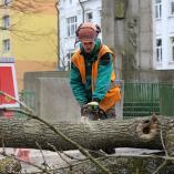 Řezání větve, autor: Petr Vitvar