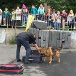 Ukázka výcviku psů, autor: Markéta Hozová